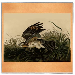 Winter Hawk - Audubon Pocket Square #ARTP-33A