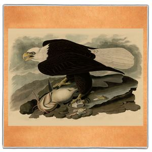 White Headed Eagle - Audubon Pocket Square #ARTP-35A