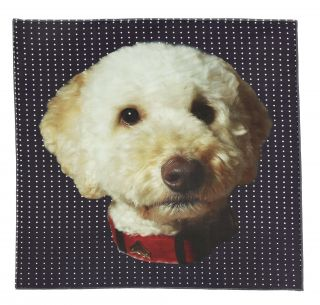 Max Labradoodle Pocket Square