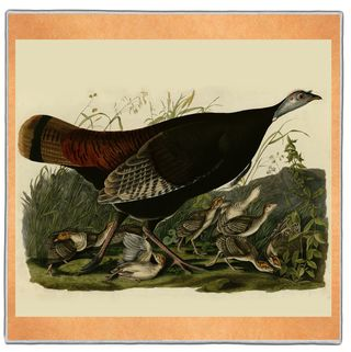 Wild Turkey - Audubon Pocket Square #ARTP-32A